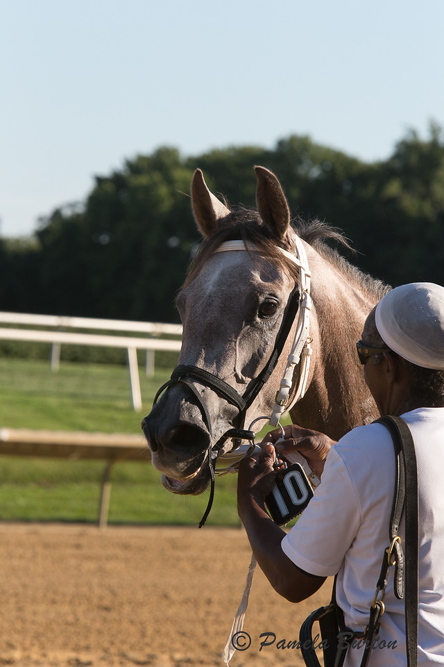 Jewell AA winner of Delaware Park Arabian Juvenile Filly Champ Gr III