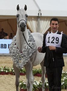 Jouna Al Naif Silver mare