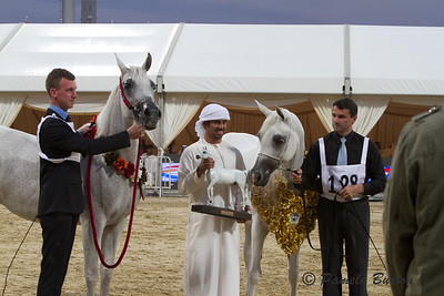 Badawieh AA , Gold Senior Mare Champion