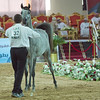 Al Raheda Ajman Stud 2nd Fillies 2 yrs