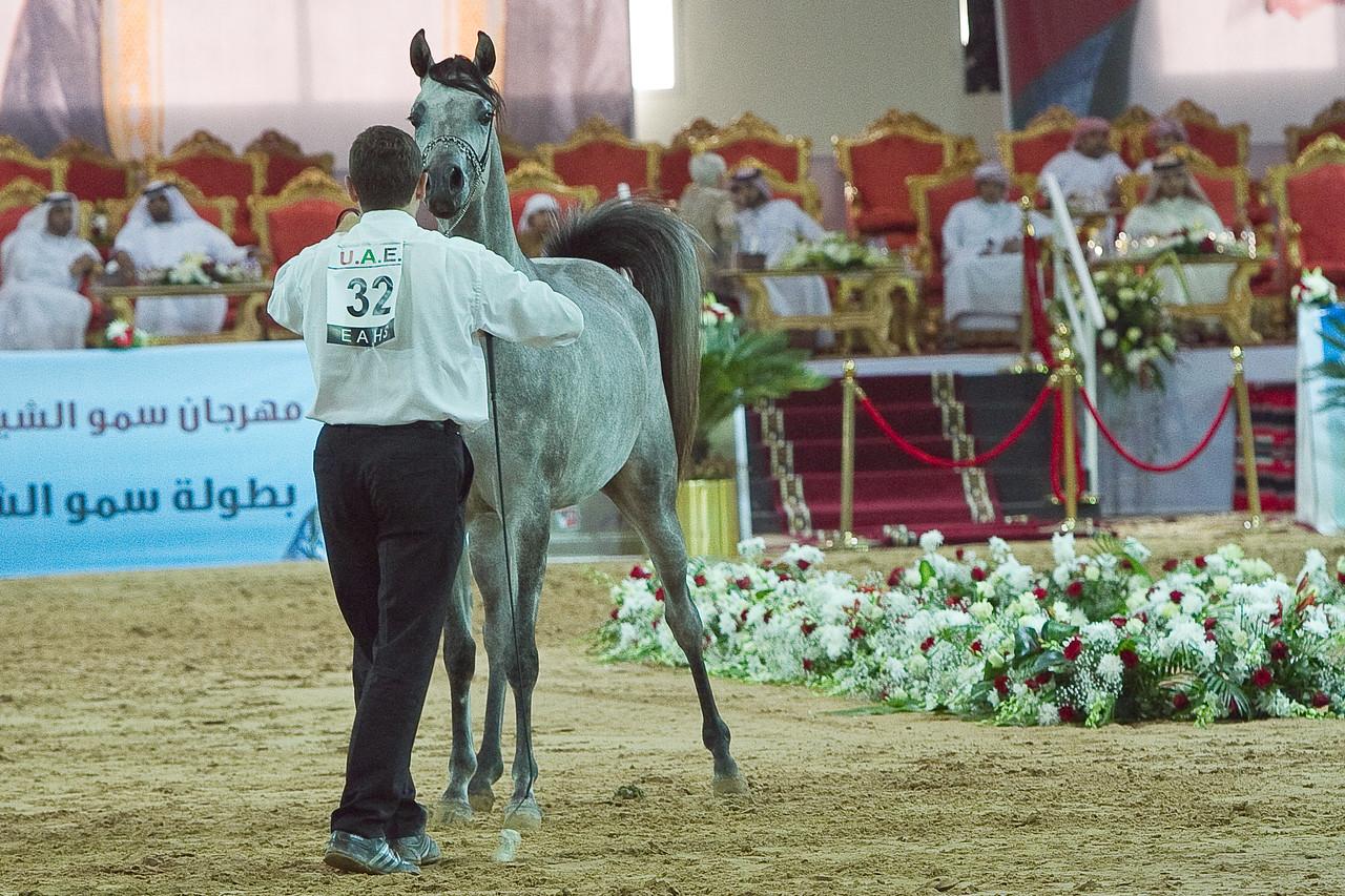 Al Raheda Ajman Stud 2nd Fillies 2 yrs