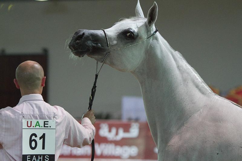 R.S. Kasiba Al Aryam