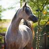 ArabiansInternational_12-16_Damarsha_520