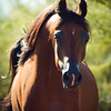 ArabiansInternational_12-16_Dominus_220
