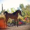 ArabiansInternational_12-16_Dominus_205