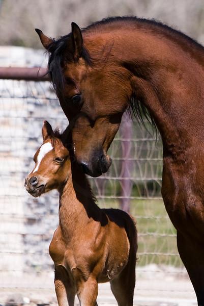 Pinga & Foal