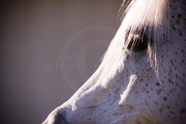 The Horses 11-10