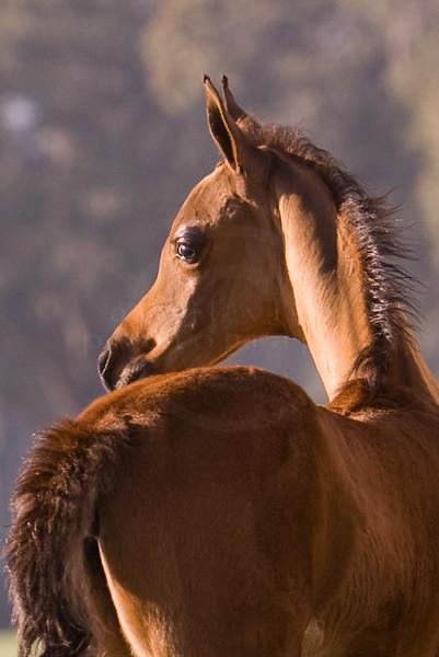 The Horses - 2010
