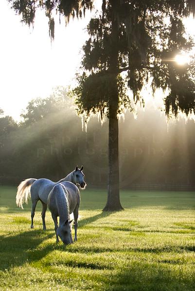 The Horses-08