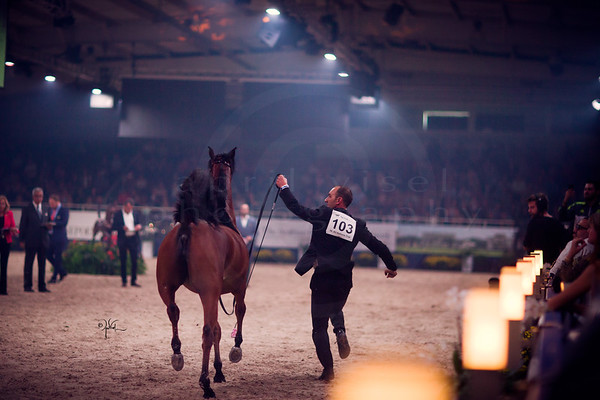 2016 All Nations Cup- Aachen