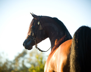 Pat McGinnis Arabians