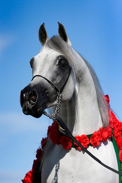 Major & Horses 8-08
