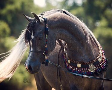 Varian Arabians