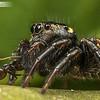 Round Ant Eater