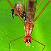 Unknown Spseudoscorpion