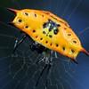Gasteracantha quadrispinosa