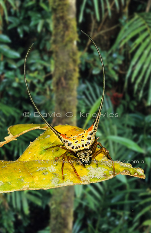 The South-east Asian spiny spider Macracantha arcuata has the most extreme spines of any spider. I suspect the extreme elongation and curvature of the dual spines might serve as a 'bird beak snagger'. This could only be supported by the hardened abdominal exoskeletons peculiar to these spiders