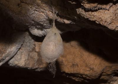 Cave Spider 3