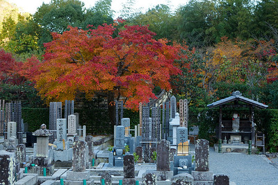 Cemetery at Adashino Nenbutsu-ji Temple in Arashiyama/Kyoto  In Autumn with Red Maple Foliage