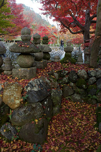Stone Lanterns at Adashino Nenbutsu-ji Temple  Graveyard with Autunm Leaves in Arashiyama/Kyoto