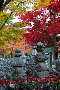 Stone Lanterns at Adashino Nenbutsu-ji Temple in Arashiyama/Kyoto  Cementery in Autumn with Maple Tree Foliage
