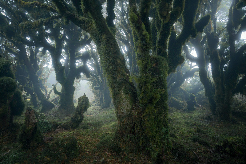 """Eldritch Woods"""