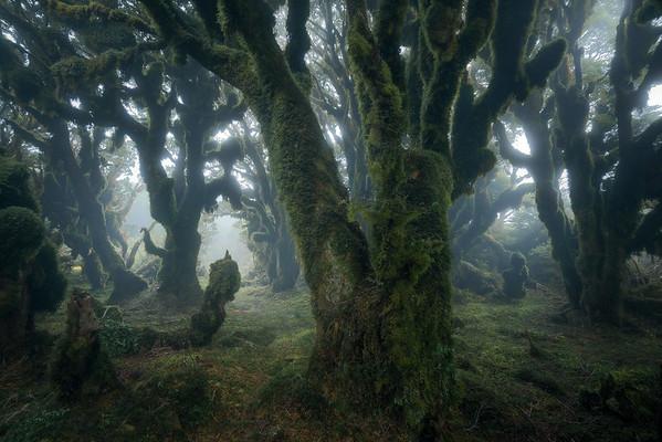 """Eldritch Woods"""