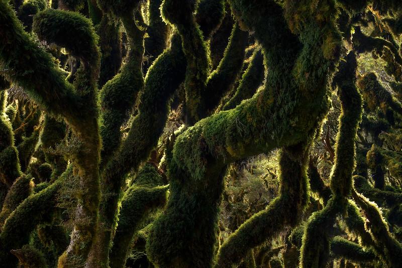 """""""Overgrown"""""""
