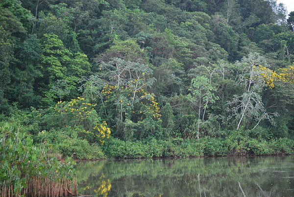 Suriname Forest