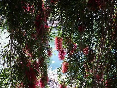 UCDavis Trees