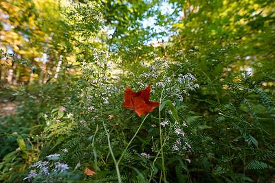 Arboretum Autum-21