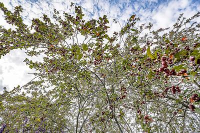 Arboretum Autum-31