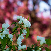 Flowers, tree's, nature, Horticulture,
