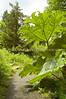 Arboretum Plants 85