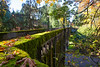 Arboretum Autumn 121