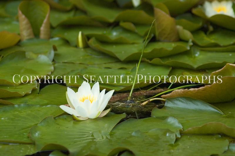 Arboretum Pond 219