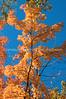 Arboretum Autumn 7