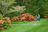 Arboretum Azalea Way 53