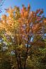 Arboretum Autumn 11