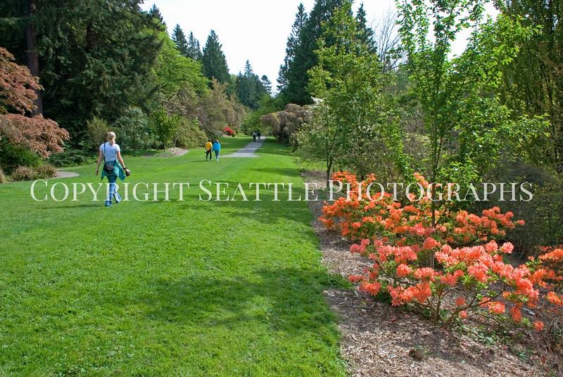 Arboretum Azalea Way 9