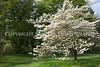 Arboretum Trees 1