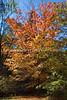 Arboretum Autumn 1