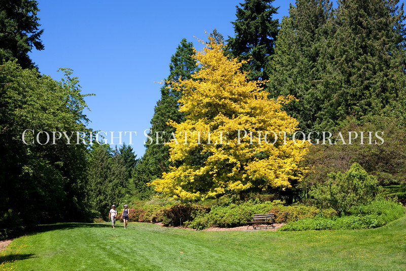 Arboretum Azalea Way 104