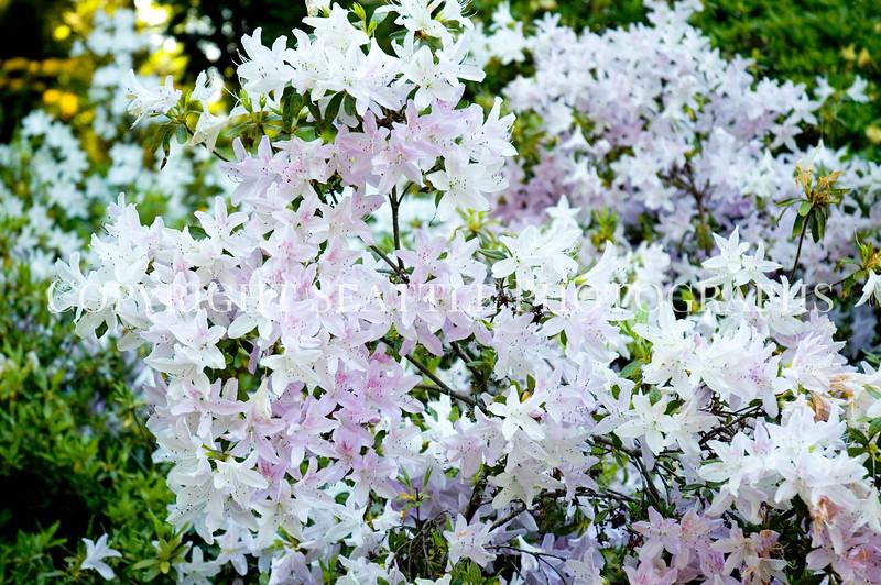 Arboretum Flowers 3