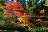 Japanese Garden Trees 1