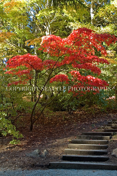Arboretum Autumn 101
