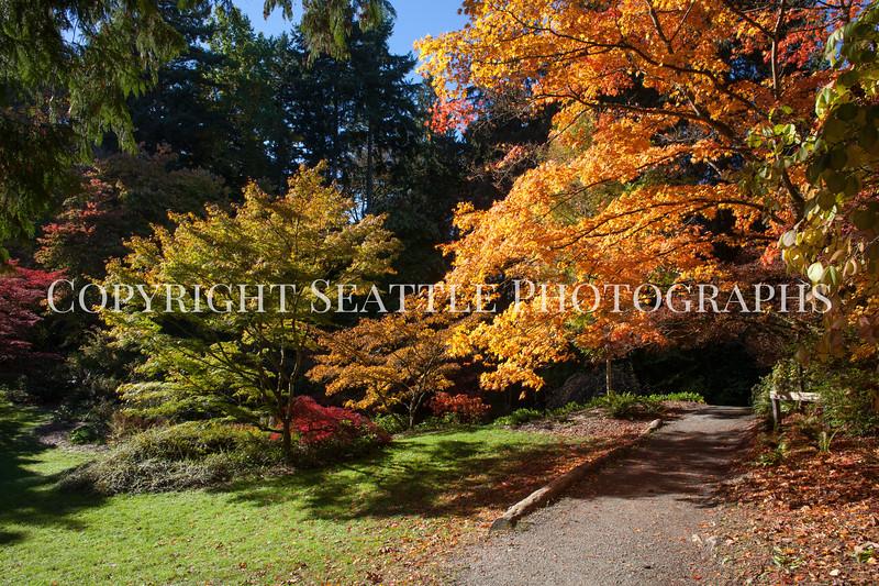 Arboretum Autumn 122