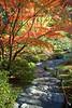Japanese Garden Path 2