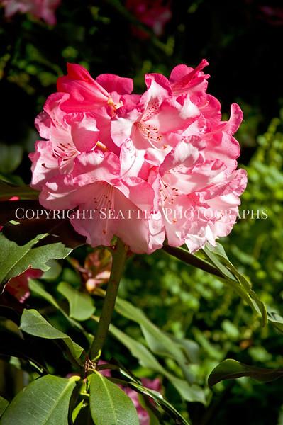 Arboretum Flowers 9