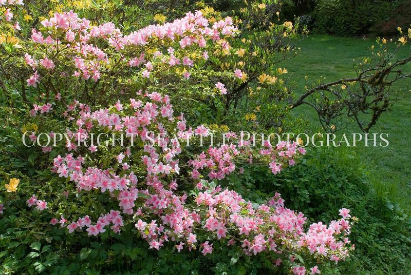 Arboretum Flowers 21